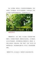 冠县二乔告诉您中国有多少种槐树