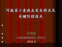 河南省小麥病蟲害發生特點及關鍵防控技術-河南植保站呂國強