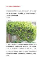 冠县二乔教您一套完整杨树种植方法