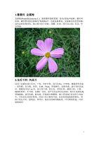 常见花名及图片