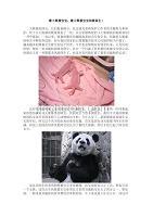 最大熊貓寶寶