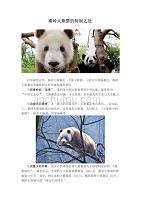 秦嶺大熊貓的特別之處